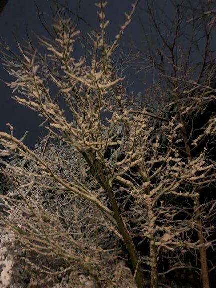 Snow In Sassafras