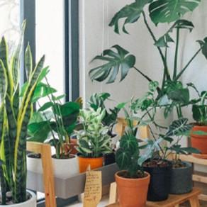 Keep Your Indoor Plants Happy This Winter