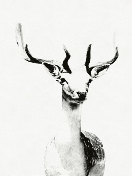 Deer Photo Framed