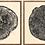 Thumbnail: Wood Grain Prints