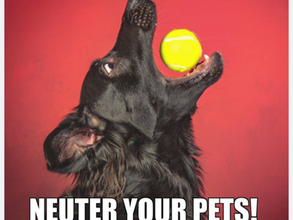 50+ Leads Generated For a Veterinary Clinic With Facebook Ads