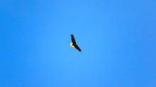 Spending lots of time watching eagle parents
