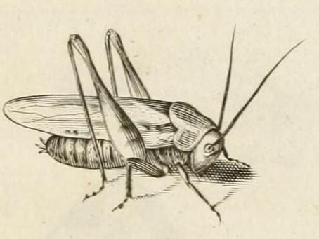 Roman Grasshoppers
