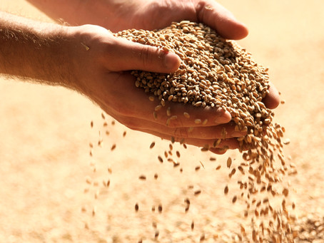 Grain and Civil Unrest in the Republic