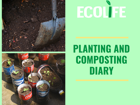 Planting and composting – An Eco-friendly step for our health and for the planet.