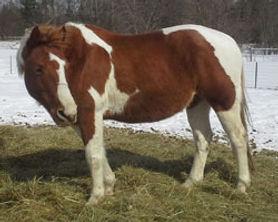 horse_chief.jpg