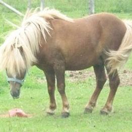 horse_punkin.jpg
