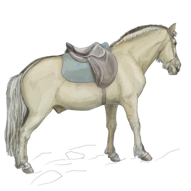 tidemand hest.jpg