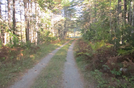 Moosehorn Road network