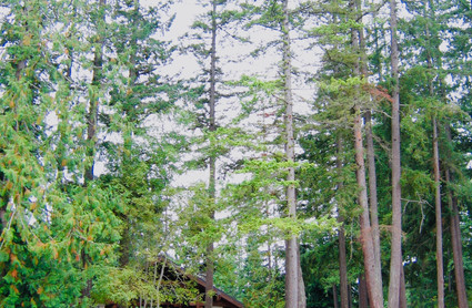 51 BL Pk. shelter tall trees.jpeg