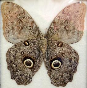 Elizabeth's butterfly.jpeg