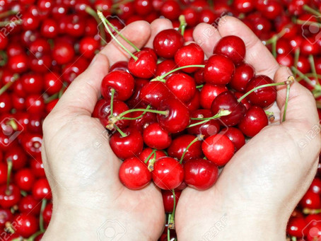 The benefits of Montmorency Tart Cherries