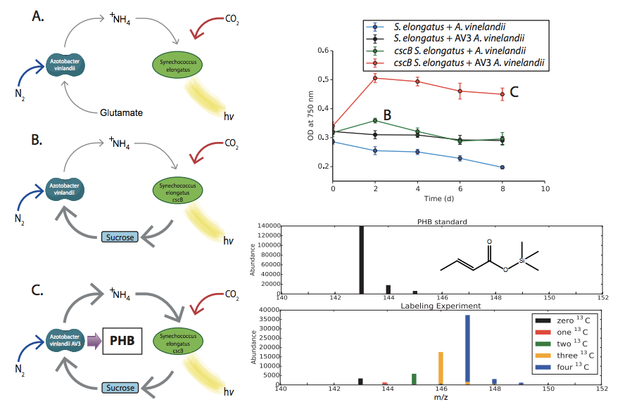 Engineering microbial cocultures for chemical photoproduction