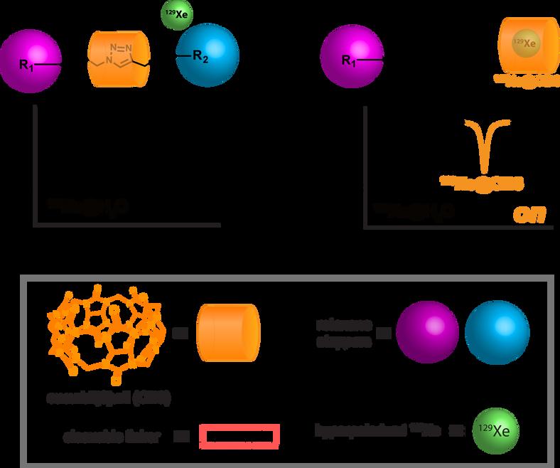 Rotaxane turn-on probes for Xe hyperCEST NMR