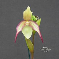 Phrag. Gail Dytrych 3N