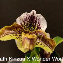 Paph Kinzua x Wonder World