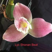 Lyc Shonan Beat
