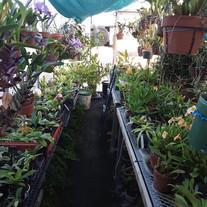 John Whiting's greenhouse