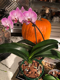Clifton Dietz orchid.jpeg