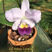 LC Indigo Love x Ctt Sierra Skies