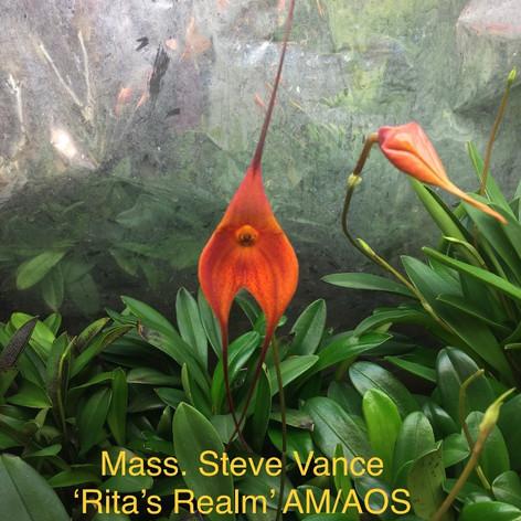 Mass. Steve Vance 'Rita's Realm' AM/AOS