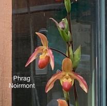 Phrag Noirmont