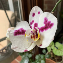 A grocery store phal