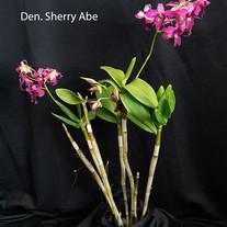 Den Sherry Abe