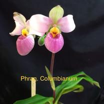 Phrag. Columbianum