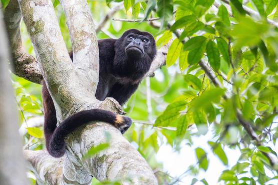 IP Monkey.jpg