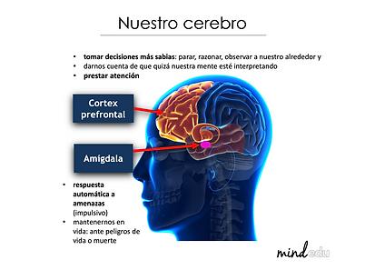 Nuestro-cerebro.png