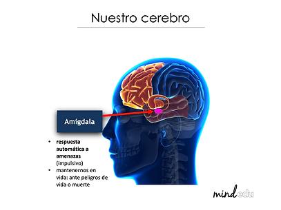 Nuestro-cerebro-amigdala.png