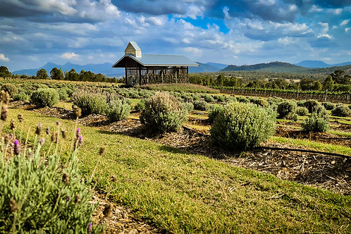 Gold Coast Outback Day Tour