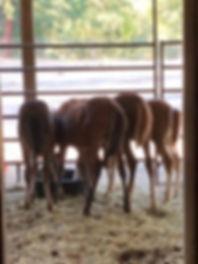 New baby butts.......omg.jpg