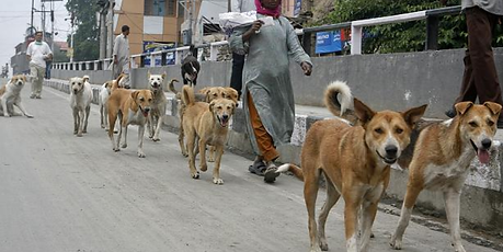 Stray Dogs India.png