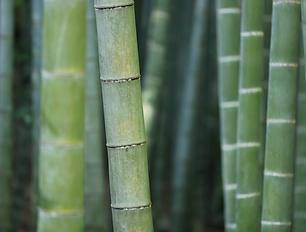 239035332683915-canva---green-bamboo-tru