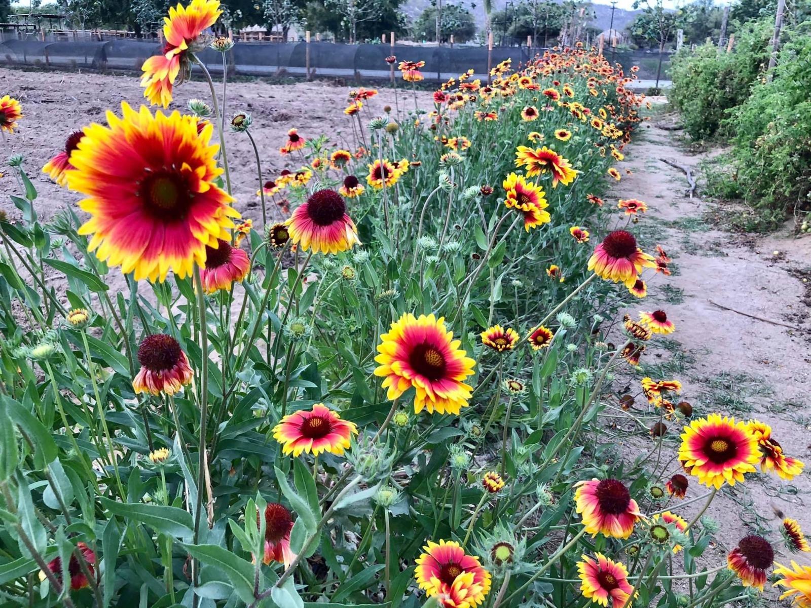 Outdoor Gardening Space