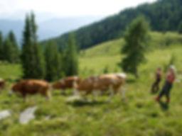 bild8.jpg