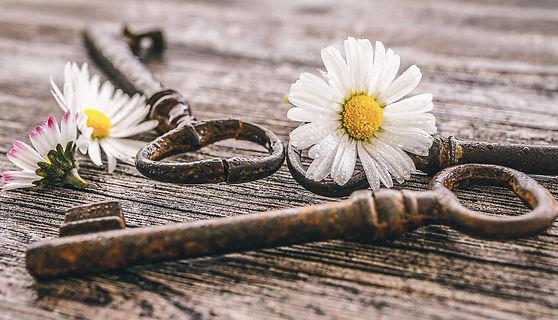daisy-5043855_1920.jpg