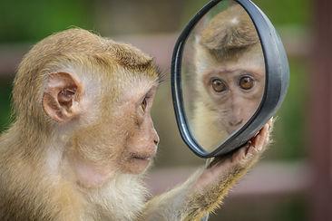 monkey-3512996_1920.jpg