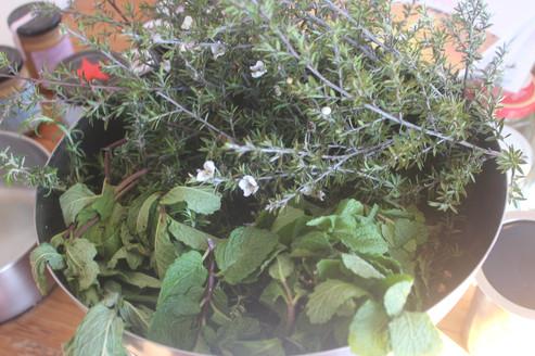Tea tree, mint and rosemary