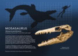 Mosasaur_info graphic_5x7.jpg