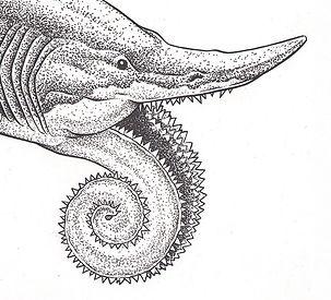 shark, rat-fish, buzz saw fish, tooth whorl, prehistoric