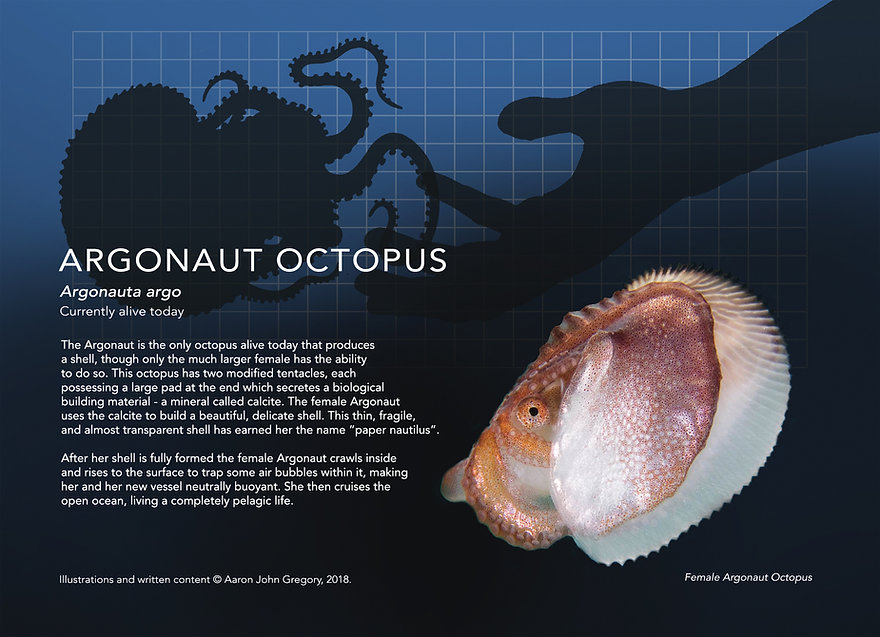 Argonaut_info graphic_5x7.jpg