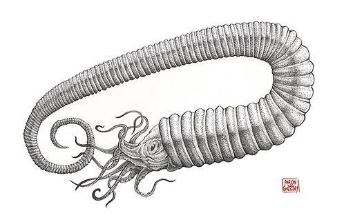 Art Print - Toxoceras