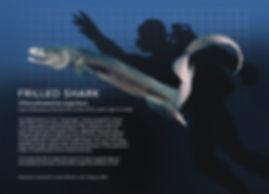 Frilled Shark_info graphic_5x7.jpg