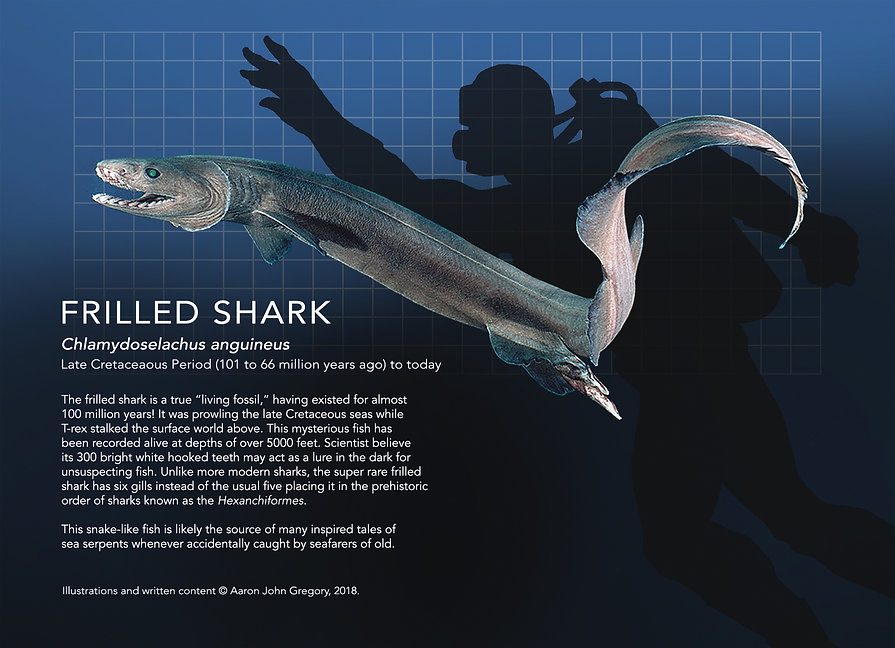 Frilled Shark_info graphic_5x7.jpg