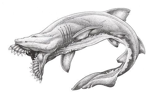 "Art Print - Edestus Giganteus ""Scissor-Jaw"" Shark"