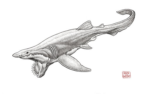 Art Print - Helicoprion