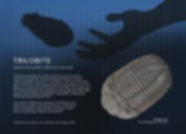 Trilobite_info graphic_5x7.jpg